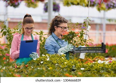 Florists women working with flowers in a greenhouse. Young women working together in flower garden. Women entrepreneurs.