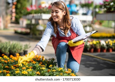 Florists women working with flowers in a greenhouse