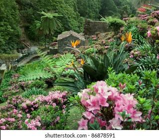 flourish vegetation at Sao Miguel Island