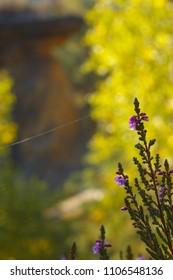 A flourished heath with a cobweb
