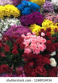 Flover colors at istanbul