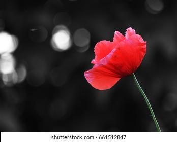 Flower.. - Shutterstock ID 661512847
