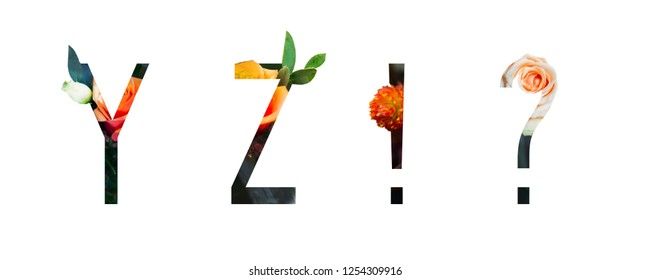 Flower Alphabet y, z, Question mark, exclamation mark made of Real alive flowers with Precious paper cut shape of letter. Collection flora font for spring and summer.