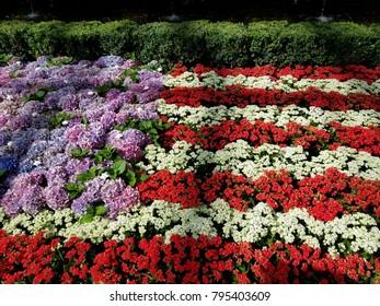 Flower American flag