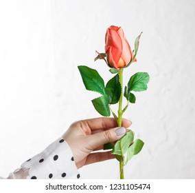 flower arrangement, florist making beautiful rosebud bouquet