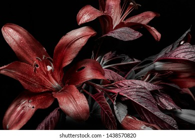 flower arrangement on a dark background, red buds and foliage, abstract lily flowers and dew drops.
