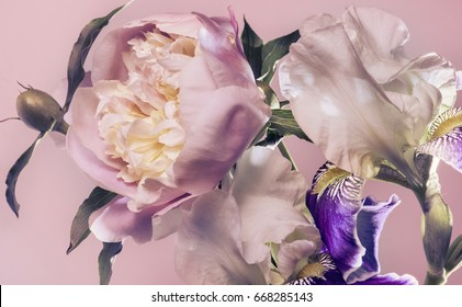 Flower arrangement of peonies and irises. Pink background.