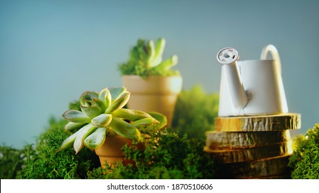 Flower arrangement. Potted succulent plants with tiny watering can decorated green moss. Houseplant care, gardening concept.