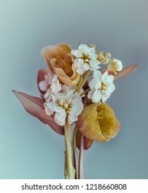 flower arrangement of small flowers, blue background, studio.