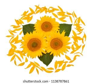 Sunflower Arrangements Ideas Images Stock Photos Vectors Shutterstock