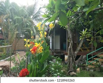 Flower in Bach Cuc Homestay, Long Hai Beach, Ba Ria Vung Tau, Vietnam