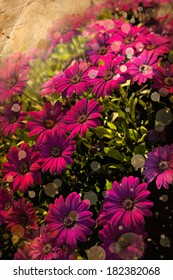 Flower background, Beautiful pink flowers made with color filters, spring bloom, retro background