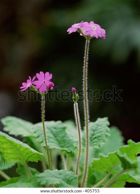 flower, background, bright, colorful, fun, landscape, nature, outdoor, pretty, scenery, wild
