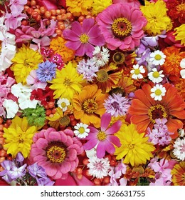 Flower background. A background from cultivated flowers and berries, the top view.