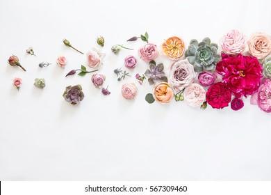 Flower background horizontal photo on white background