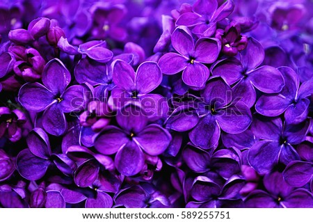 Flower Background Lilac Flowers Spring Garden Stockfoto Jetzt