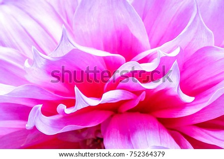 Flower Background Spring Flowers Stockfoto Jetzt Bearbeiten