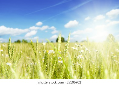 flower background with sun rays and clouds