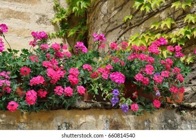 A flower balcony with geranium