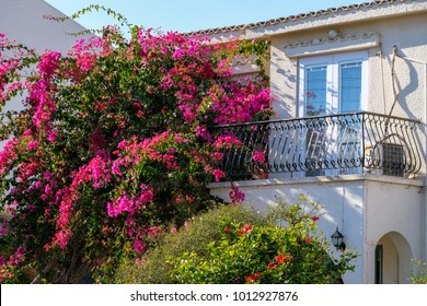 Flower at a balcony. Lush vegetation on the streets of Larnaca