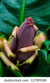 Flower of the banana in green leaves