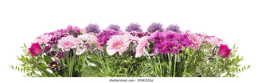 Flower banner with pink flowerbed of  gerber, chrysanthemum and daisies, panorama, isolated