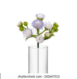 flower in beaker, Test tubes with flower isolate on white background
