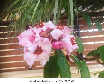Flower is beautiful