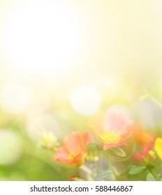 Flower beautiful background blur