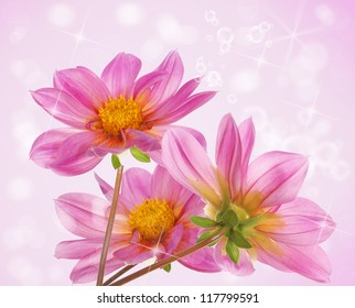 Flower beautiful decorative card