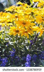 A flower bed of autumn flowers. Background, shallow depth of field