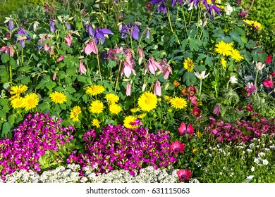 A flower bed with beautiful blossoms of different perennial plants in the garden.