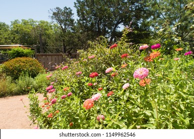 a flower bed with different blooms in a butterfly garden