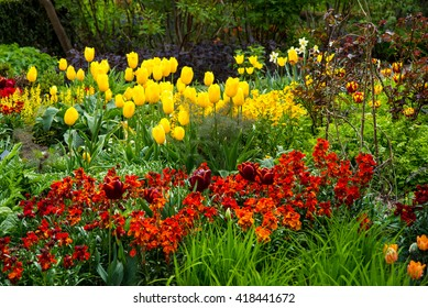 Flower bed featuring tulips and wallflowers