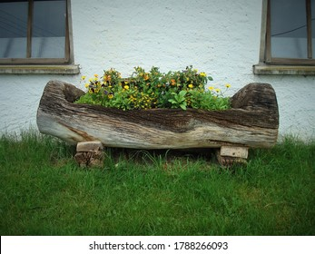 Flower bed made in a big log, standing on green grass and in front of white wall