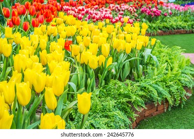 Flower bed of multicolor tulips on day time.