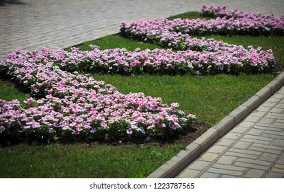 Flower bed with pink petunias, zigzag placing, in the middle of sidewalk, Donetsk municipal park zone