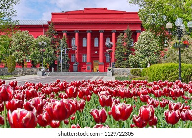 A flower bed with red-and-white tulips against the backdrop of Kyiv National Taras Shevchenko University. Kiev, Ukraine