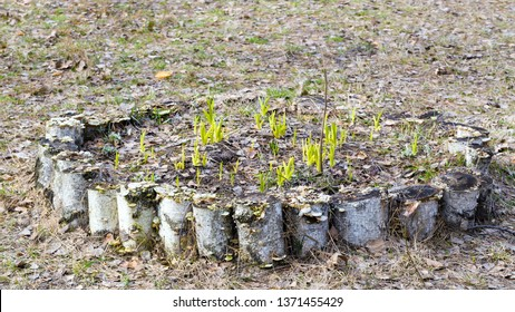 Flower bed with a stump fence