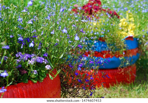 Flower Beds Arranged Old Tires Painted Stock Photo Edit Now