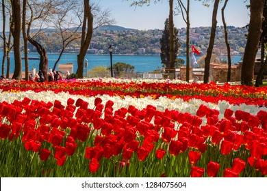 Flower beds with red and white tulips in the tulip festival Emirgan Park, Istanbul, Turkey
