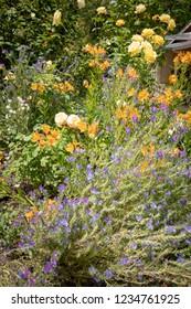flower beds seen in local garden ramble, Gisborne, New Zealand