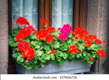flower beds in yards, on window sills and balconies. Amateur floriculture of French cities