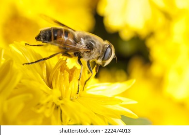 Flower with bee, pollination