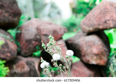 Flower in between stones