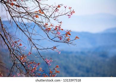 Flower bloomed on soft light background in spring season.