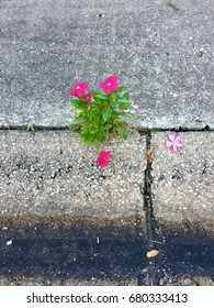 Flower blooms in cracked driveway.