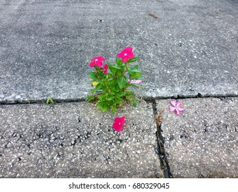 Flower blooms in cracked pavement.