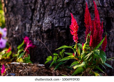 Flower blooms red in front of a tree