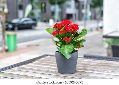 Flower blossoming in pot on table outdoor in Hamburg, Germany. Flower arrangement, floristry, floral decor, design.